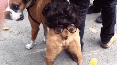 Ho Ho Ho!-dog-butt-costume.jpg