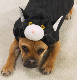 Name:  dog-dressed-as-cat-costume.png
