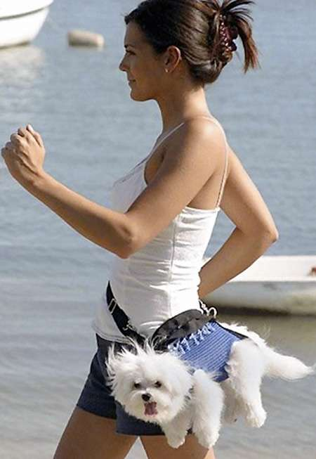 Let's talk about the fanny pack-dog-fanny-packs-solutions-let-your-pooch-keep-up-you-run.jpg
