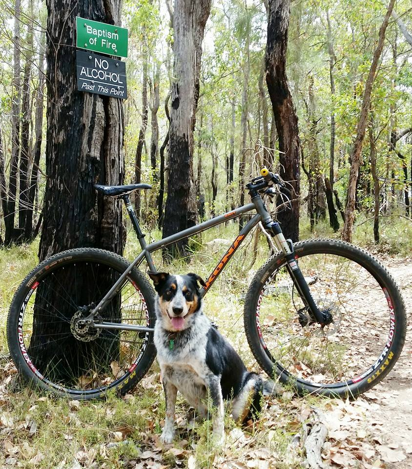 Post your dog with your single speed-dog.jpg