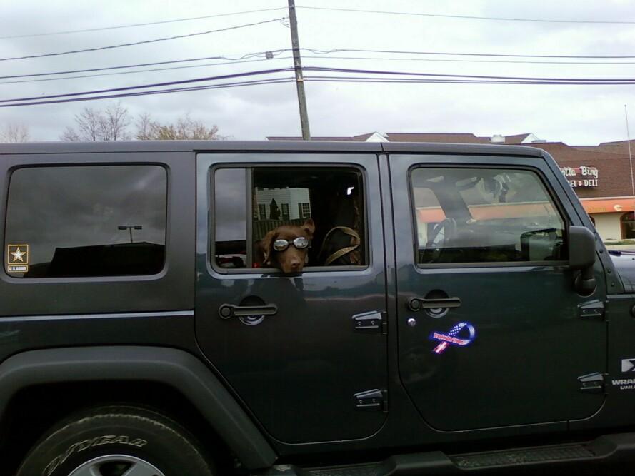 The Jeep thread-dog.jpg