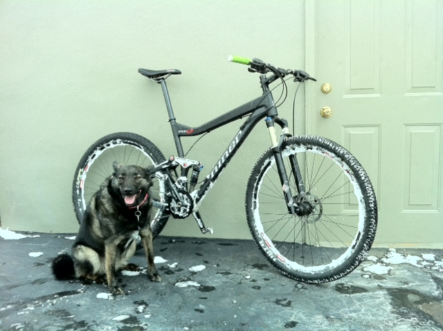 First snow ride of 2011-dogbike.jpg