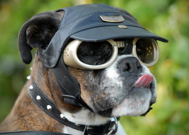 Baskets....-doggles-dog-goggles-1.jpg