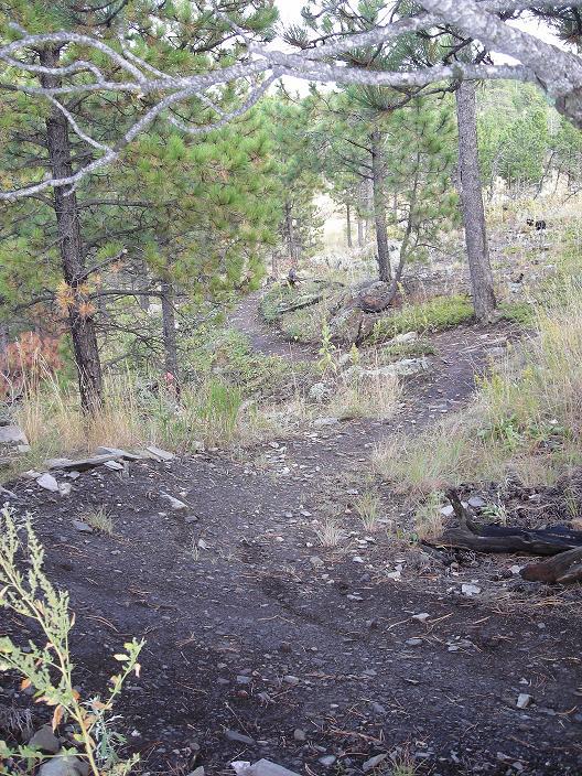 Most UNDER rated Mountain Bike destination /town?-dogs-bike-022.jpg
