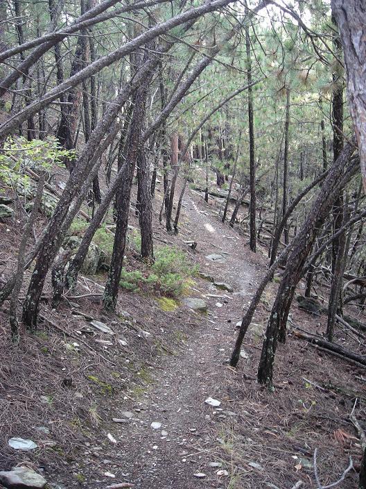 Most UNDER rated Mountain Bike destination /town?-dogs-bike-024.jpg