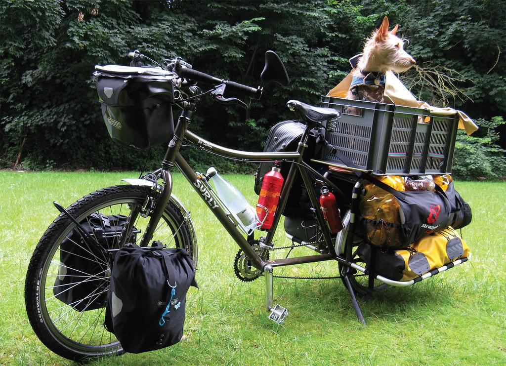 Taking the Dog - Surly Big Dummy-dogs-bike-ride.jpg