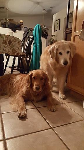 Name:  dogs.jpg Views: 133 Size:  49.7 KB