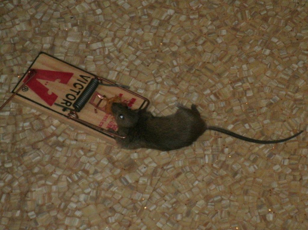 The Official Rats Ass Rendition Thread...-dr.jpg
