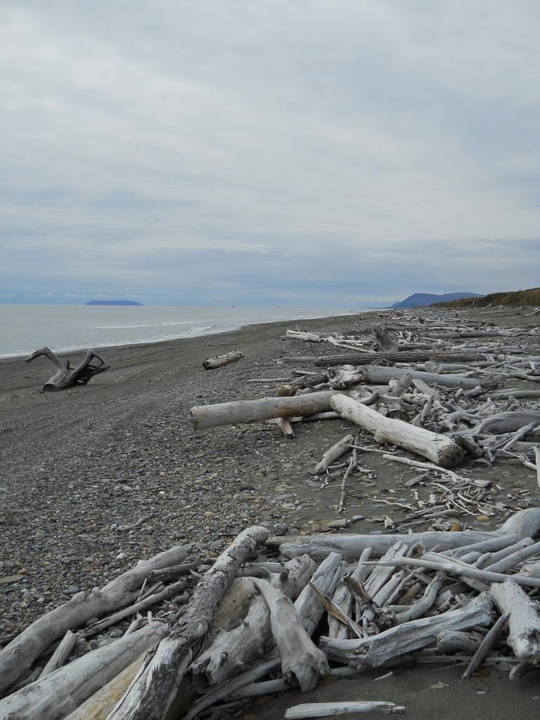 Beach/Sand riding picture thread.-driftwood.jpg
