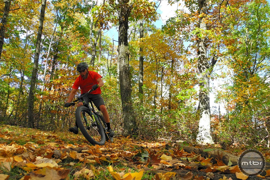 Drifty Leaves