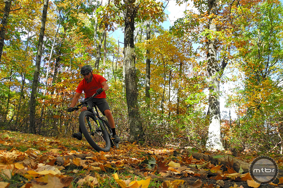 Dense trees provide a truly unique fall foliage experience. Drifting through the densely blanketed trails is a truly euphoric experience.