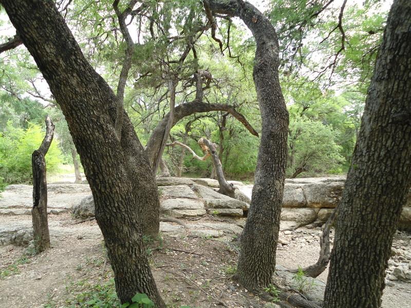 Leon Creek in Pics-dsc00065.jpg