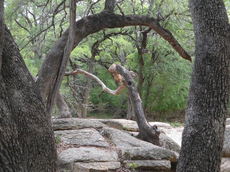 Leon Creek in Pics-dsc00066.jpg