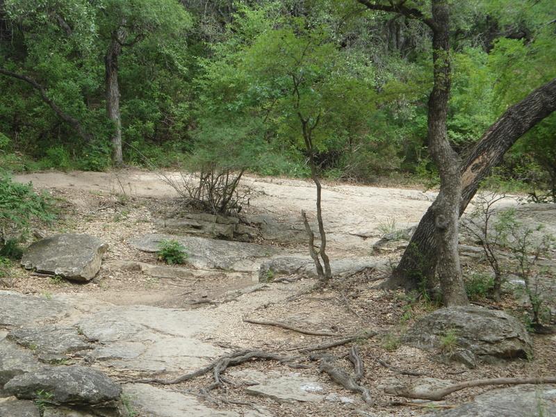 Leon Creek in Pics-dsc00067.jpg