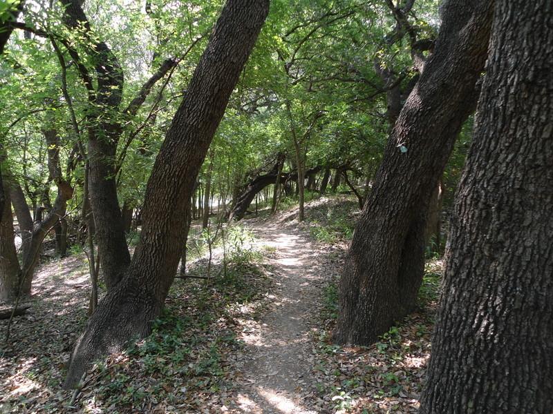 Leon Creek in Pics-dsc00080.jpg