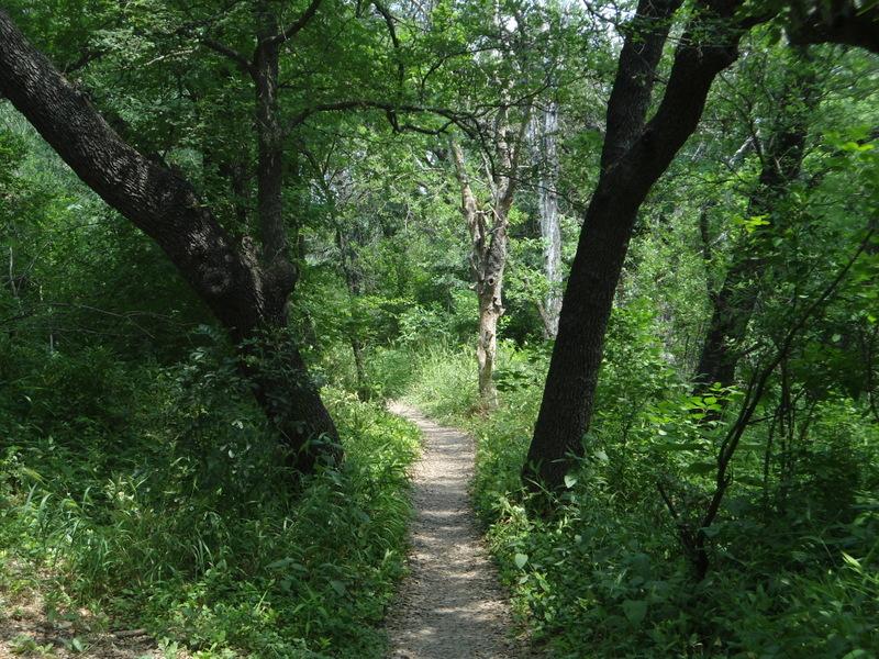Leon Creek in Pics-dsc00091.jpg