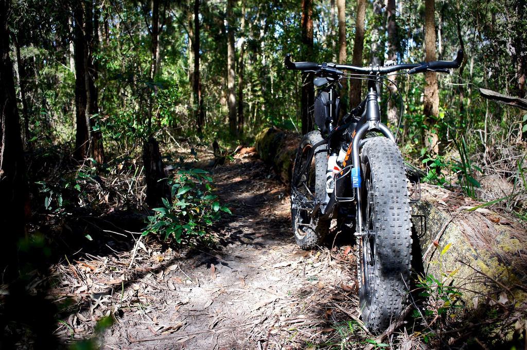 Daily fatbike pic thread-dsc00100.jpg