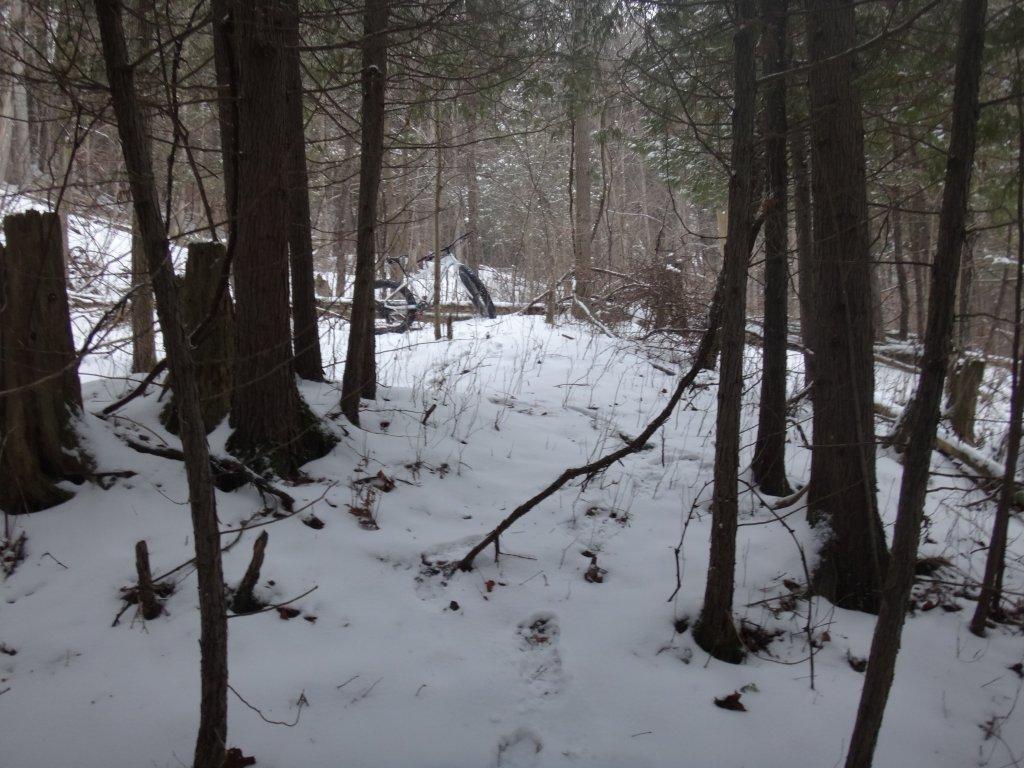 Local Trail Rides-dsc01005.jpg