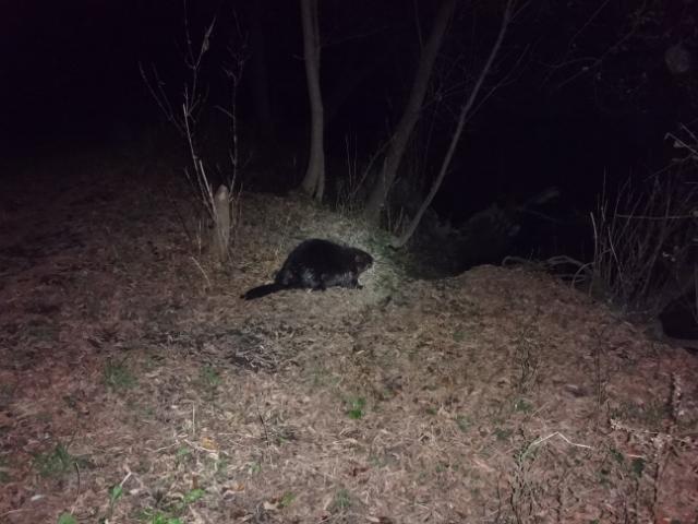 Hawg's Wildlife Adventure Thread!-dsc01673_zpse2753735.jpg