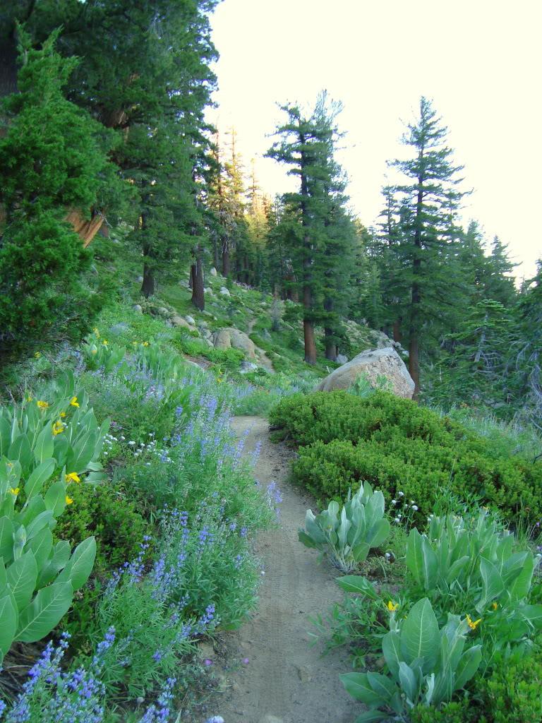 Trail Pics-dsc01879-1-1.jpg