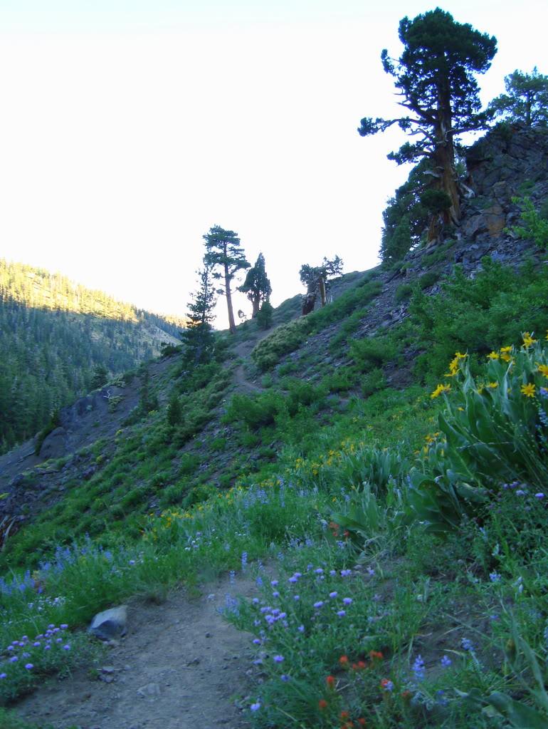 Trail Pics-dsc01908-1.jpg