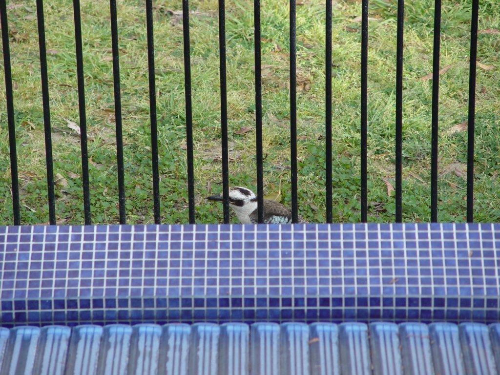 The Bird Thread...-dsc02419.jpg