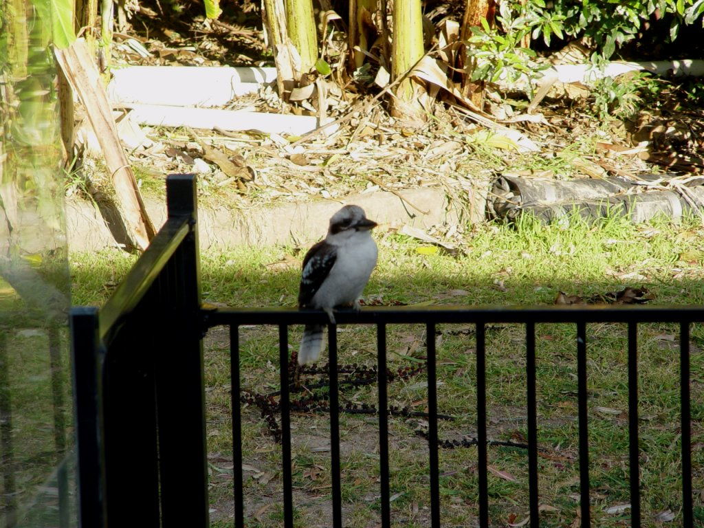 The Bird Thread...-dsc02424.jpg