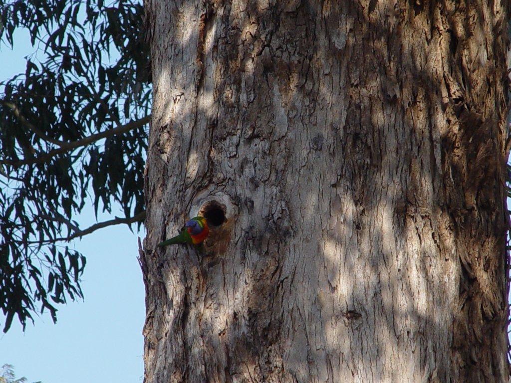 The Bird Thread...-dsc02426.jpg