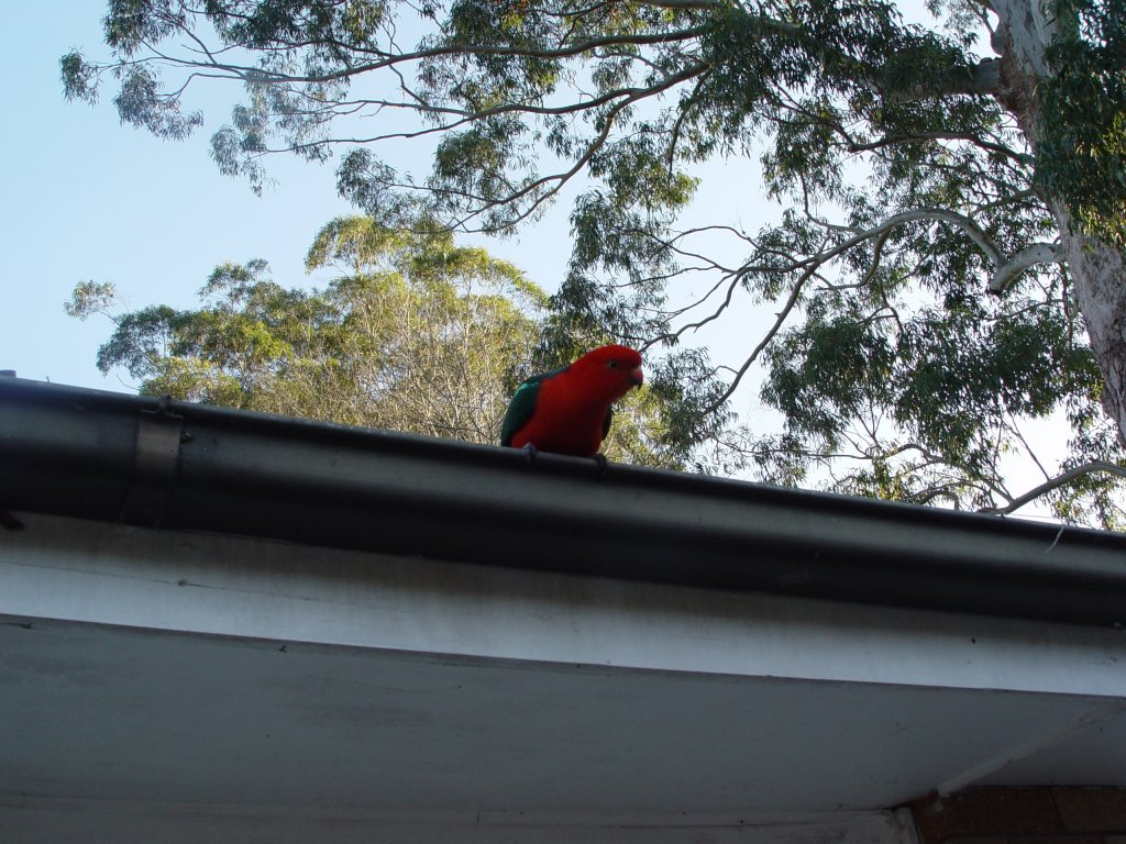 The Bird Thread...-dsc02428.jpg