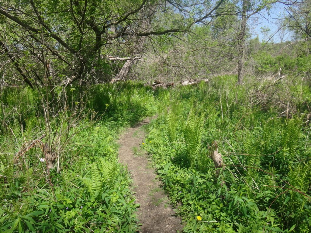 Local Trail Rides-dsc02672_zps2qvi8jvk.jpg