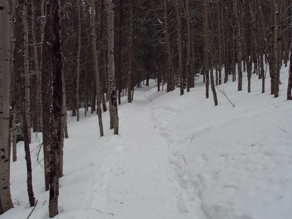 Trails for snow bikes-dsc03902.jpg
