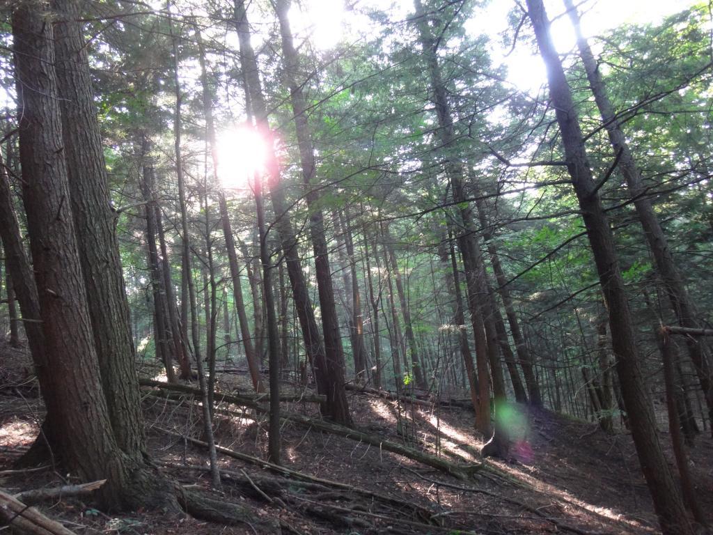 Local Trail Rides-dsc05956_zps197a5efd.jpg