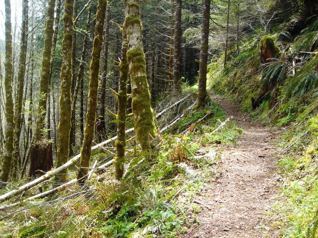 Wilson River Trail-dsc07205.jpg