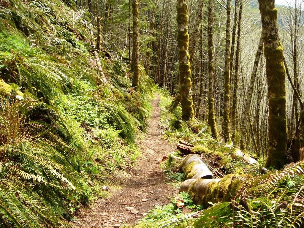 Wilson River Trail-dsc07207.jpg