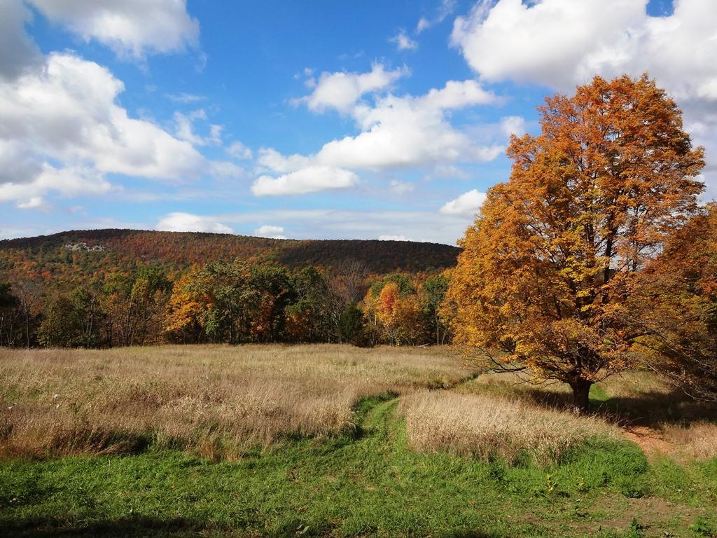 Post Pics of your Fall Foliage!!-dsc08579x.jpg