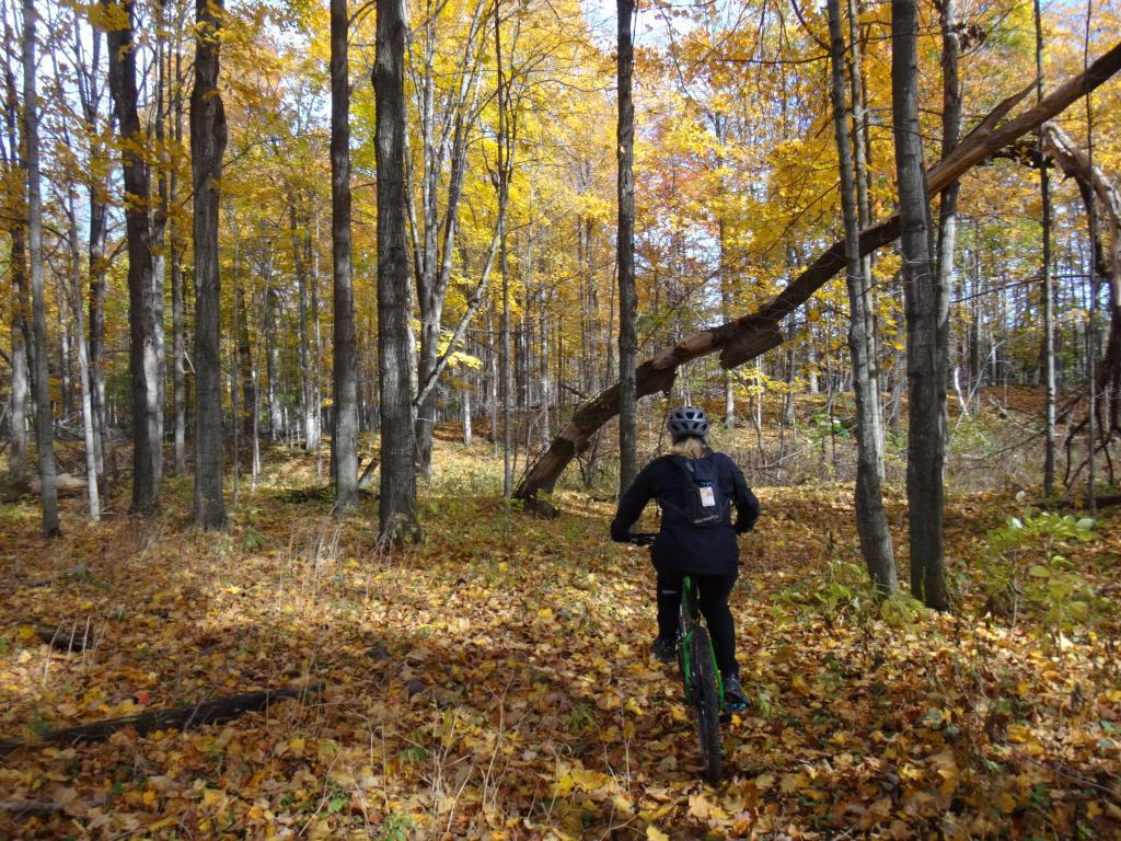 Local Trail Rides-dsc08718_zps578a536a.jpg
