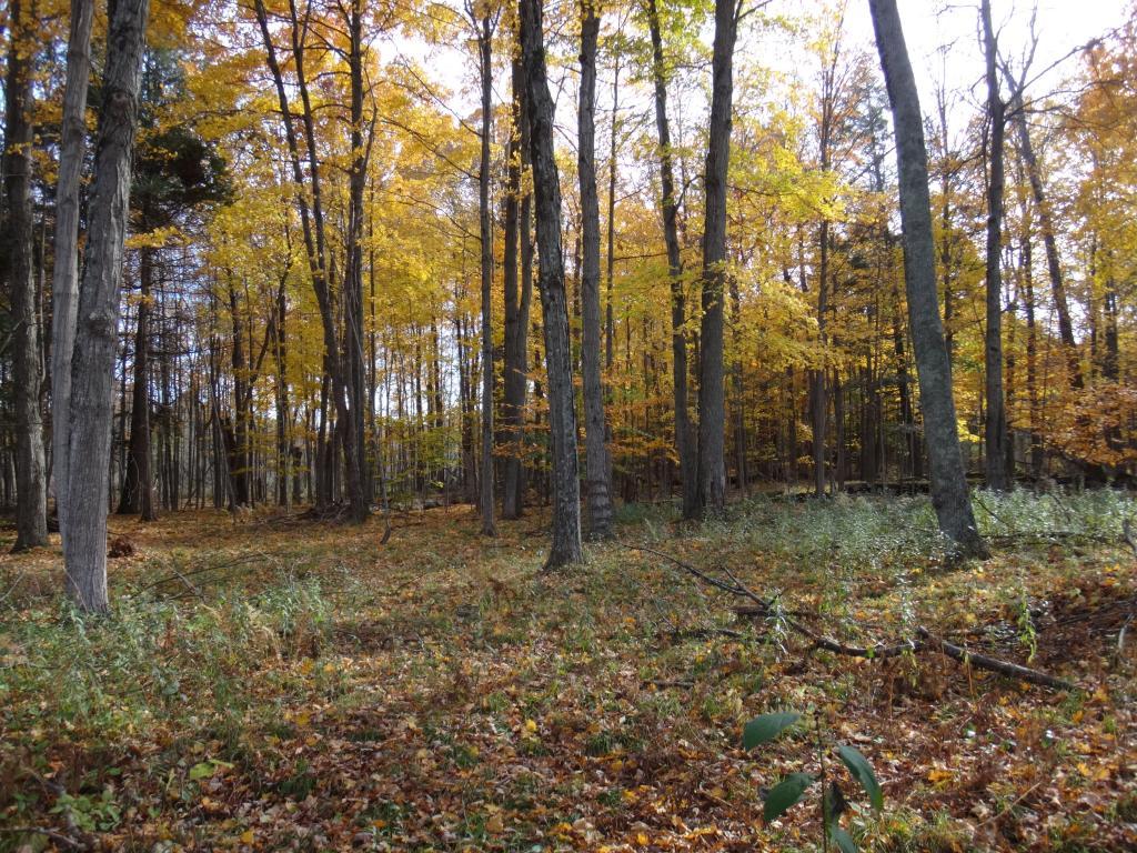 Local Trail Rides-dsc08728_zps64733b49.jpg
