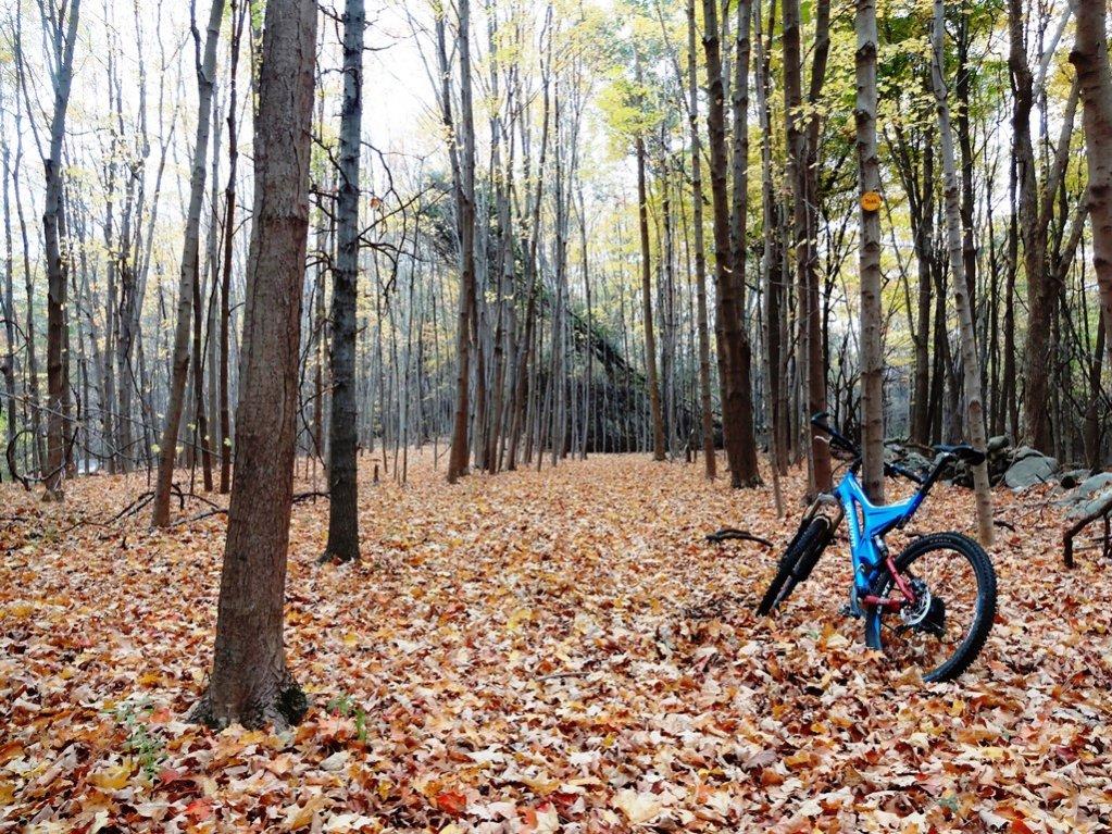 Post Pics of your Fall Foliage!!-dsc08972x.jpg