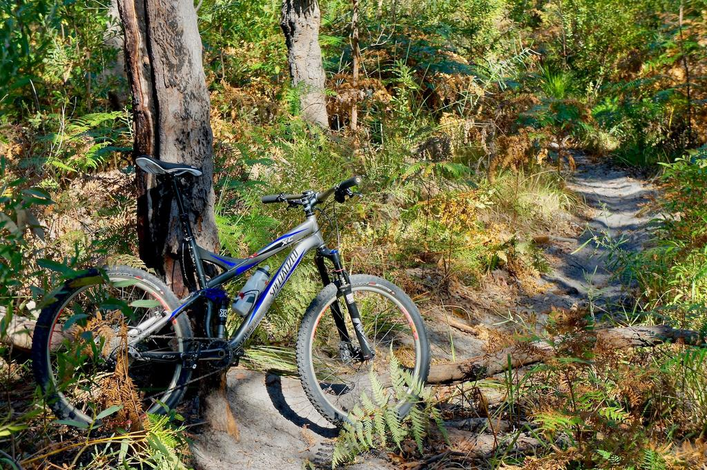 A dedicated thread to show off your Specialized bike-dsc09040.jpg