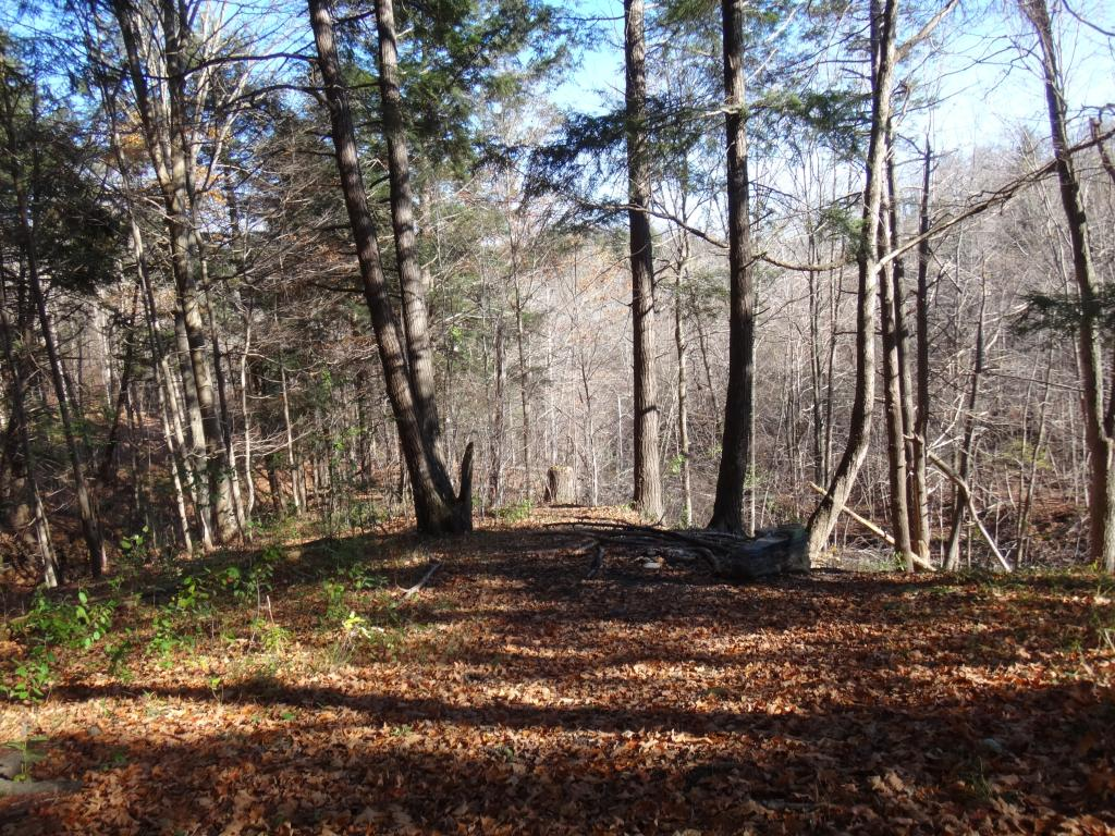 Local Trail Rides-dsc09120_zps6bea0086.jpg