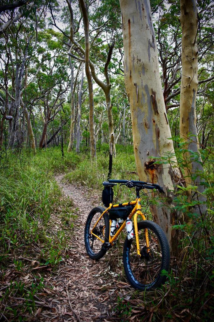 Camera for Fat Biking?-dsc09345.jpg