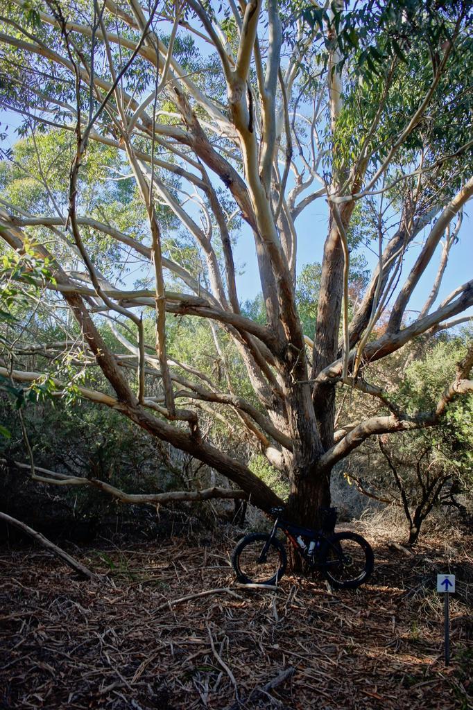 Fat Biking and health-dsc09432.jpg