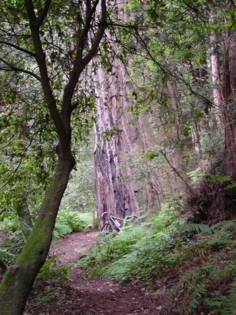 Trail Pics-dsc095311.jpg