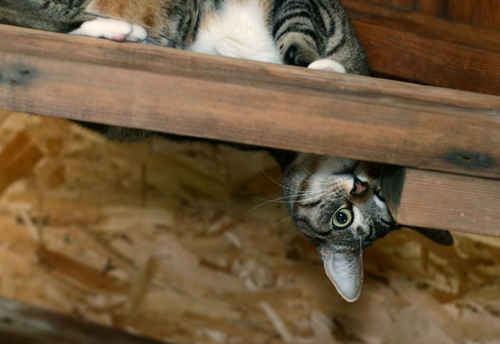 Cat Passion (here kittie, kittie, my new best friend...) Post your cat photos.-dsc_11663ps2-800h.jpg