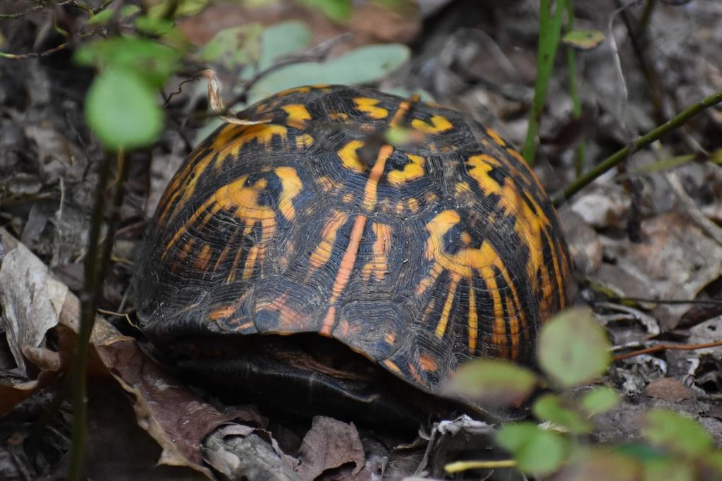 I like turtles-dsc_1200.jpg