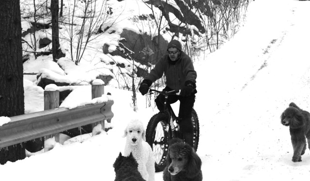 K-9 Riding buddies!-dsc_3774.jpg