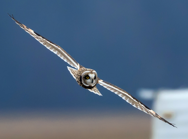 A couple of my Birding Tools!-dsc_4497.jpg