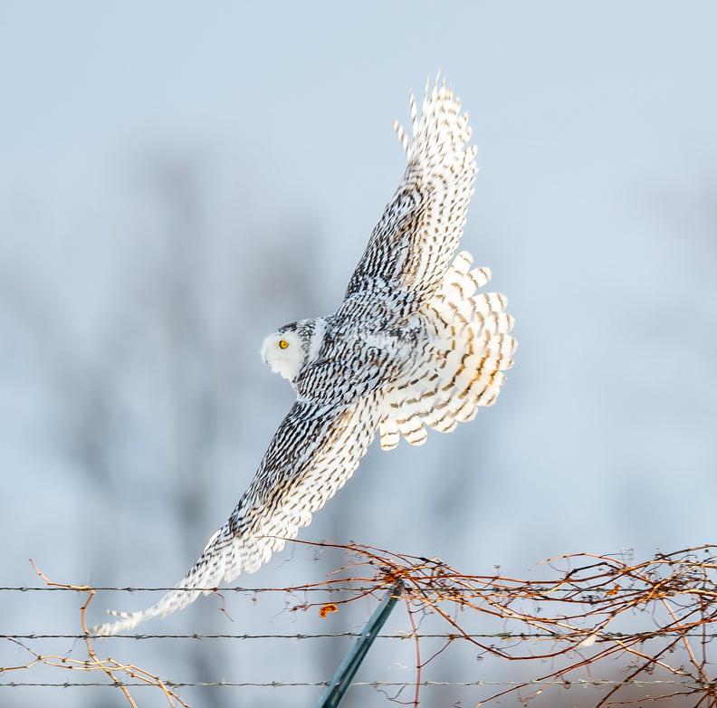 The Bird Thread...-dsc_7759.jpg