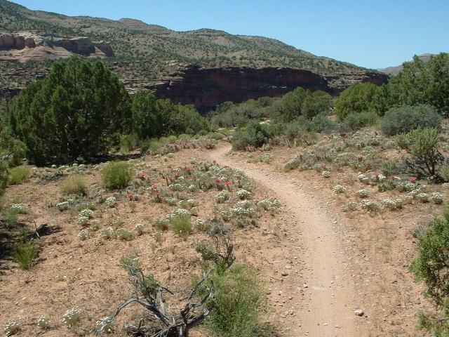 Trail Pics-dscf0015.jpg