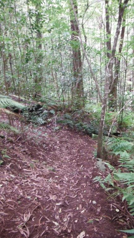 Big Island Trails-dscf0967.jpg